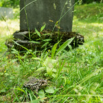 Toad sits in the grass in front of a grave stone in the forest