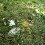 Small grave marker with words My Baby